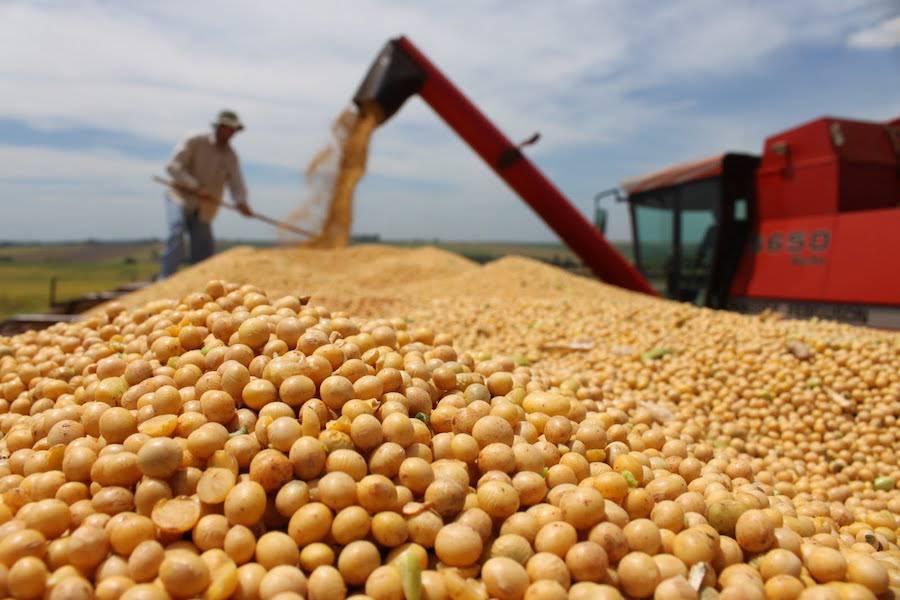 La soja se exporta por valor de US$ 361,2 mil a India, pero su exportación potencial es de US$ 2,3 millones. Foto: Archivo.