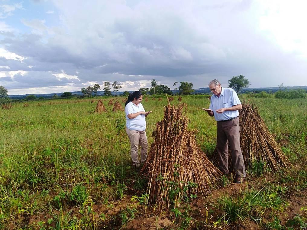 En el 2009 se detectaron residuos de agroquímicos por encima del límite permitido, lo que obligó a Paraguay a solicitar ayuda al Japón. Foto: Gentileza.
