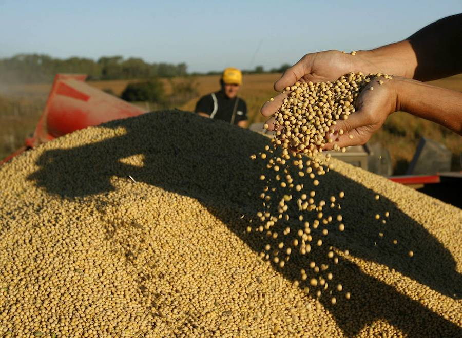 La estimación de producción de soja de Paraguay se mantuvo, el aumento de precios de dicho commodities favorecería las exportaciones.FOTO:ARCHIVO