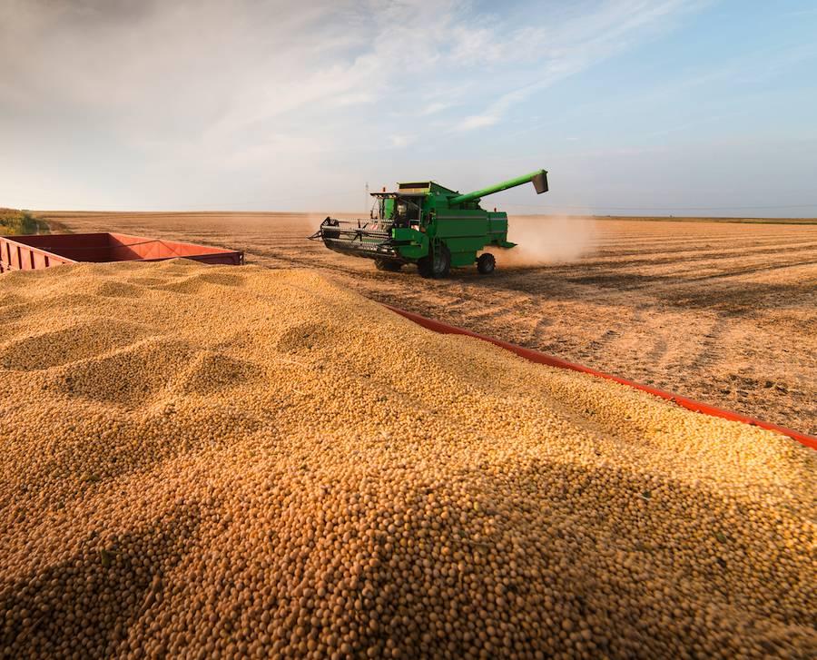 Existe una expectativa positiva en lo que puede llegar a ser la producción de soja de este año. Foto: Archivo.