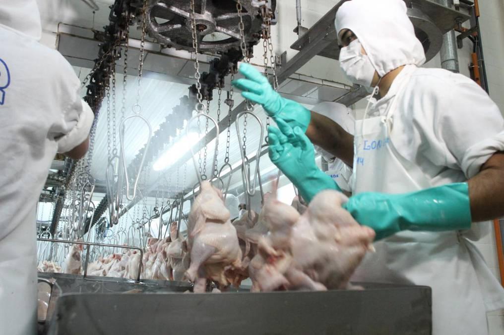 Pese a que en enero se exportó 111,6 toneladas más en el complejo aviar, en cuanto a ingresos hubo una caída del 34%. Foto: Archivo.